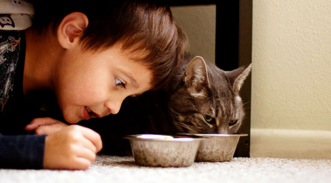 The Dish on How Much to Feed Your Cat